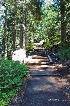 Some of the stairs to the top of Larch Mtn.